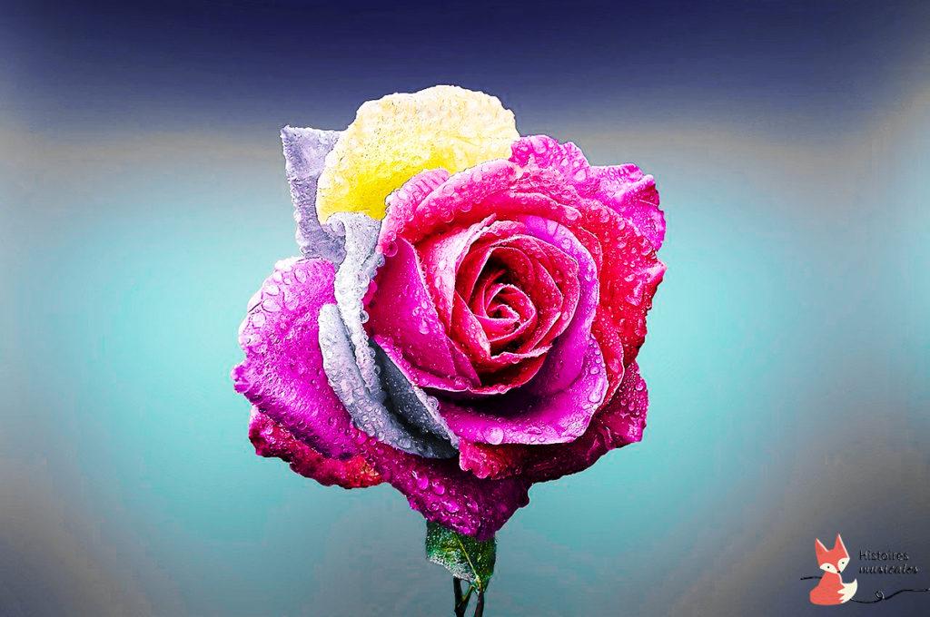 à la recherche de la rose qui guérit